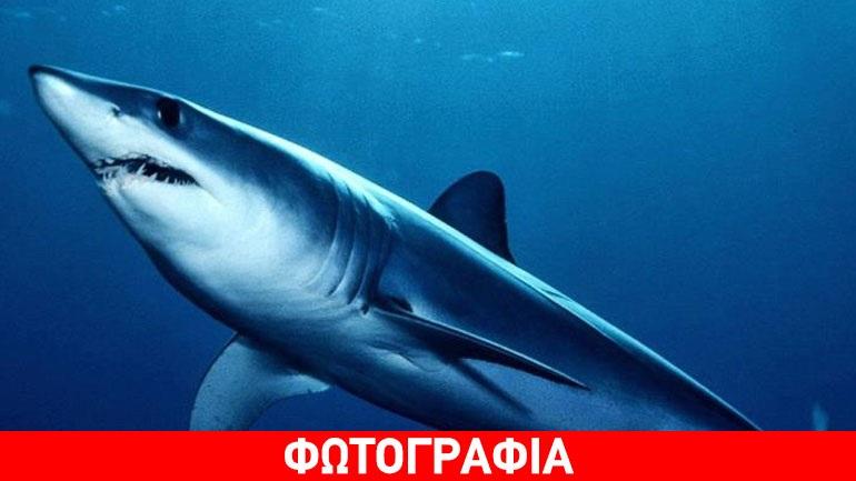 Κύπρος: Καρχαρίας δύο μέτρων πιάστηκε στα δίχτυα ψαράδων στη Πάφο